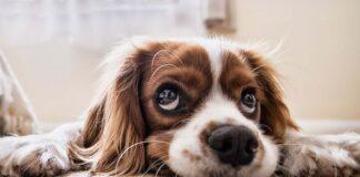 Die Hundesteuer 2021 wird fällig