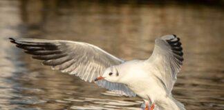 Geflügelpest: Sicherheitsmaßnahmen für Geflügelhaltung und Fütterungsverbot für Wildvögel