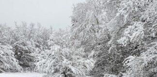 Winter macht jetzt richtig Ernst - Eisige Aussichten: Bis minus 25 Grad