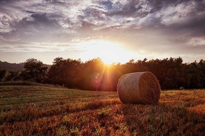 EU-Kommission genehmigt Beihilfen für Landwirte in Bayern