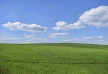 Fröttmaninger Heide: Wiesenbrüterschutz in Zeiten von Corona