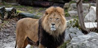 Der Tierpark Hellabrunn in der Corona-Pandemie