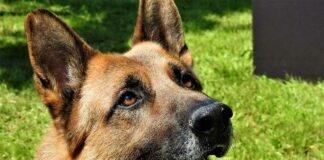 Münchner Zoll verabschiedet drei Diensthunde in den Ruhestand