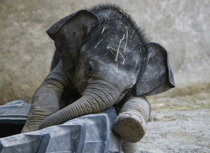 Tierpark Hellabrunn bleibt während der 'Ruhetage' vom 1. bis zum 5. April geschlossen