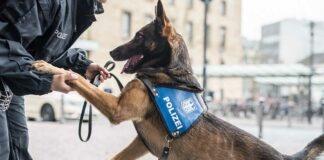 Bundespolizist unterstützt Zugbegleiterin - Beamter mit Diensthund schreitet ein
