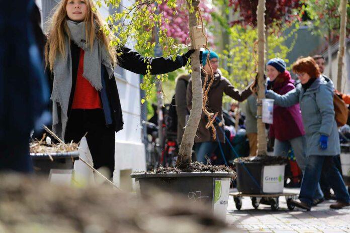 Wanderbaumallee in der Unteren Weidenstraße: Green City e.V. sucht Gießpat*innen