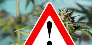 Warnung vor Cannabisprodukten mit synthetischen Cannabinoiden