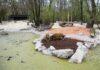 Hellabrunn: Neue Außenanlage für die Pinselohrschweine