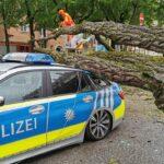 Schwabing: Baum fällt auf Streifenwagen