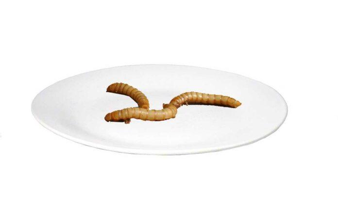 Als erstes Insekt wurde der gelbe Mehlwurm als neuartiges Lebensmittel zugelassen