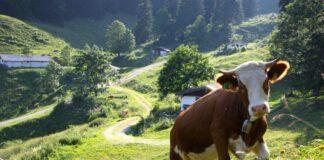 Naturschutzgebiet Geigelstein feiert 30-jähriges Jubiläum