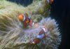 Fisch-Kinderstube im Hellabrunner Aquarium