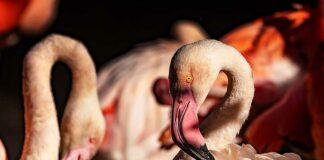 Neue Übernetzung für Flamingo-Anlage