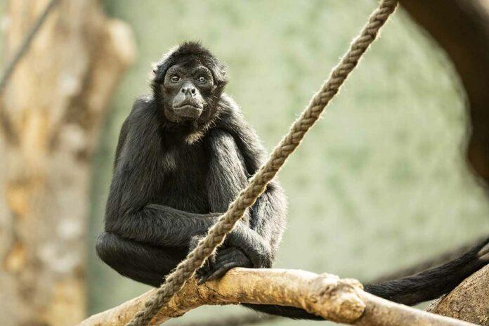 Neue Südamerika-WG in Hellabrunns 'Welt der kleinen Affen'