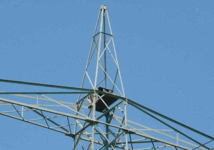 SWM erneuern Nisthilfen für Wanderfalken am Ismaninger Speichersee